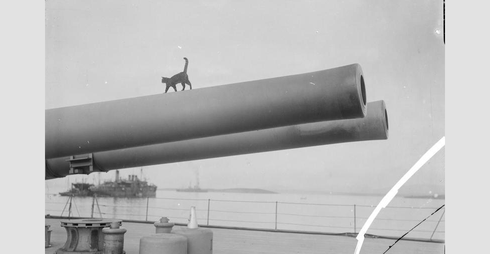 The mascot cat of the Royal Navy battleship HMS Queen Elizabeth walking along a 15 inch gun.